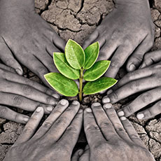 hands touching a plant emerging from soil